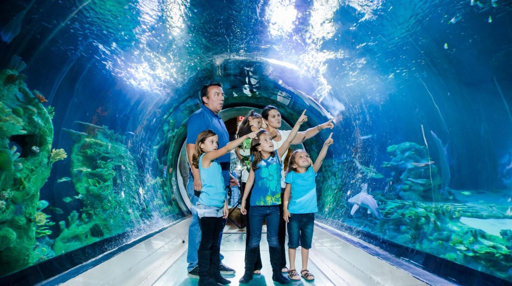 Visit The Sea Life Aquarium & See 30+ London Top Sights